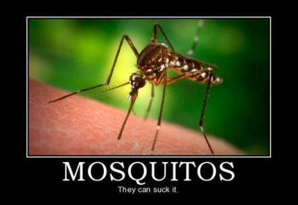 Image from http://www.outthere.life/kill-em-all-black-belt-mosquito-defense-part-1/